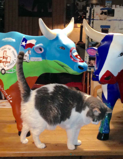 2 Cows & Molly the cat