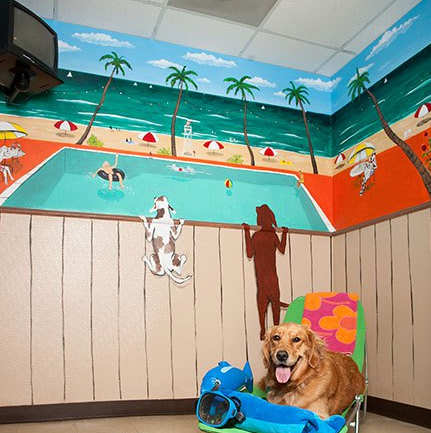 Custom Painted Dog Suite at Rover Oaks Pet Resort