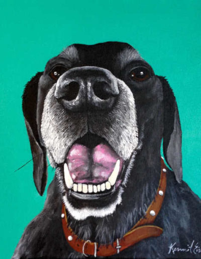 Dog Portrait - black dog with brown collar