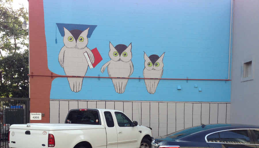 owls on wall